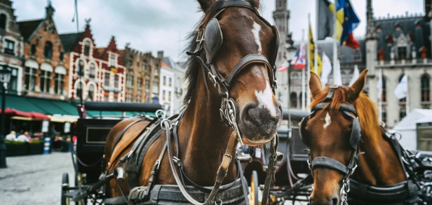 romantic-bruges-break-for-two-with-michelin-star-dining-_-horse-drawn-carriage_background